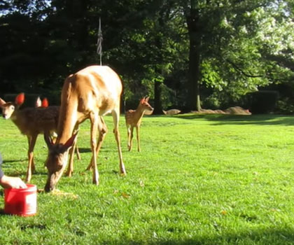 how to attract deer to your property
